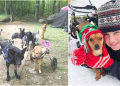 Женщина приютила шесть собак-инвалидов подарив им море счастья и лучшую жизнь
